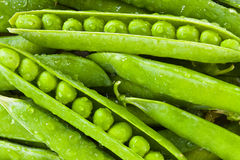 Green Pea Royalty Free Stock Photo