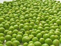 Green pea grains. Peeled green pea grains closeup Stock Images