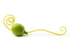 Green pea isolated Stock Image
