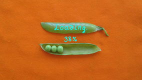Green pea loading bar on orange background stop motion animation. Computer style. Time lapse stock video footage