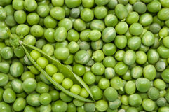Green pea pod on the background of green peas. Fresh green pea pod in the corner on the background of green peas - directly above shot Royalty Free Stock Photo
