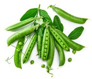 Green pea in pod with leaves still Stock Image