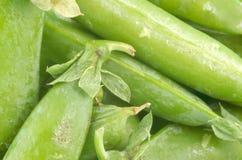 Green pea pods royalty free stock photos