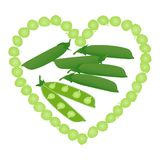 Green pea pods and open peas in pod on white background. stock images
