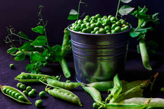 Green pea pods in a tin Royalty Free Stock Image