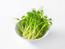 Green pea shoots Royalty Free Stock Images