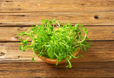 Green pea shoots. Bowl of green pea sprouts Stock Photo