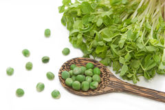 Green pea with snow pea sprouts Royalty Free Stock Images