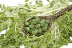 Green pea with snow pea sprouts Stock Photo