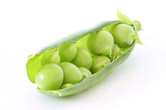 Green pea in stuffed pod Stock Image