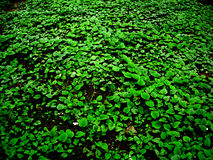 Green Peace. Green Foliage Royalty Free Stock Photos