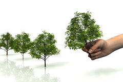 Green peace. Scene of the hand with tree Stock Image