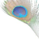 Green Peacock feathers Stock Photos