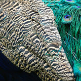 Green Peafowl feathers Stock Photography