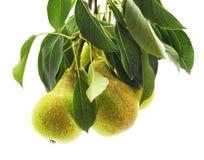 Green pear with leaf. Green pear with leaf on white background Stock Photography
