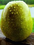 Green pear on a rainy day. Green pear covered with rain drops Royalty Free Stock Photography