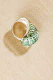 Green pearly  shell  on  sea sand Royalty Free Stock Image