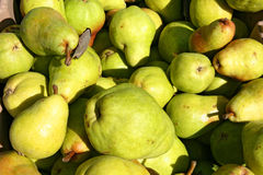 Green pears Stock Images
