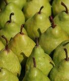 green pears royaltyfri bild