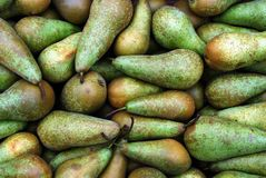 Green pears at a famers market in Vilnius city in annual traditional crafts fair Royalty Free Stock Photo