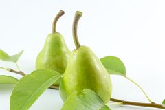 Green pears and pear  branch on white backgrround Royalty Free Stock Images