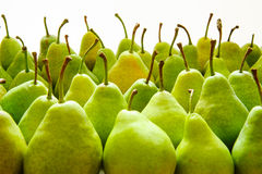 Green pears. Green  Ripe Pears. Fruits Background Royalty Free Stock Image