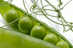 Green peas. Against the white background by the closeup Stock Photos