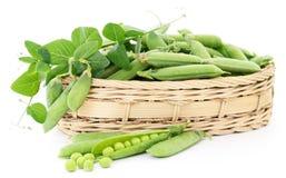 Green peas in basket. Stock Image