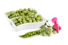 Green Peas and a branch with flower Royalty Free Stock Images