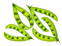 Green peas close up. Open pods. Ingredients. Kitchen. Open pods of fresh green peas isolation on a white background without shadows. Close paln. View from above Royalty Free Stock Photo