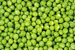 Green peas. Frescoes green green peas and freshly reaped Royalty Free Stock Photos