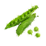 Green peas and pea pods  illustration Stock Photography