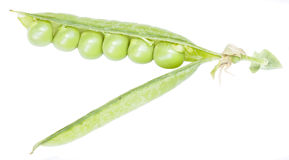 Green peas in the pod Royalty Free Stock Photography