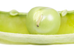 Green peas in the pod Royalty Free Stock Photos