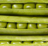 Green peas and pods Stock Photography