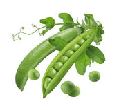 Green peas pods open and closed  5 Royalty Free Stock Photo