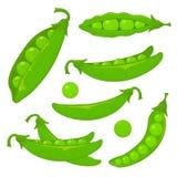 Green peas. Set of ripe green peas,  on white background, illustration Stock Photos