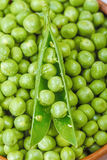 Green peas Royalty Free Stock Image
