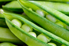 Green peas. There are green and fresh peas in pods Royalty Free Stock Images