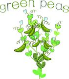 Green peas with title Stock Photography