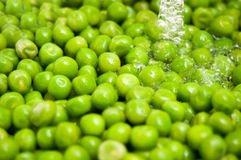 Green peas washing Royalty Free Stock Image
