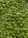 Green peas in water Royalty Free Stock Image