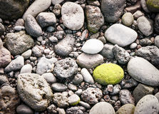 Green pebble. At a beach (gran canaria) - nice background pattern Stock Photography