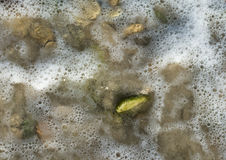 Green pebble in seafoam Royalty Free Stock Photography