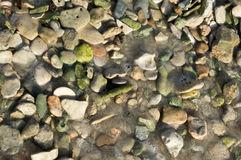 Green pebbles Stock Photography