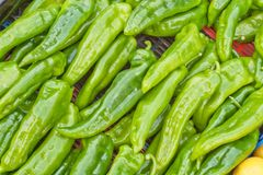 Green pepper Royalty Free Stock Photos