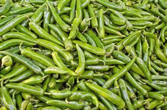 Green Pepper Royalty Free Stock Image