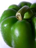 Green Pepper. A green pepper with water droplets stock photos