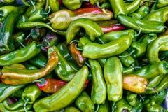 green pepper Royaltyfri Bild