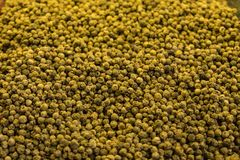 Pile of green whole peppercorns background, spices, oriental cooking Stock Photos